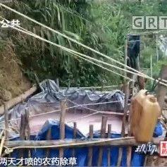 连续几日,肇庆呢条村多名村民中毒,真相令人震惊!